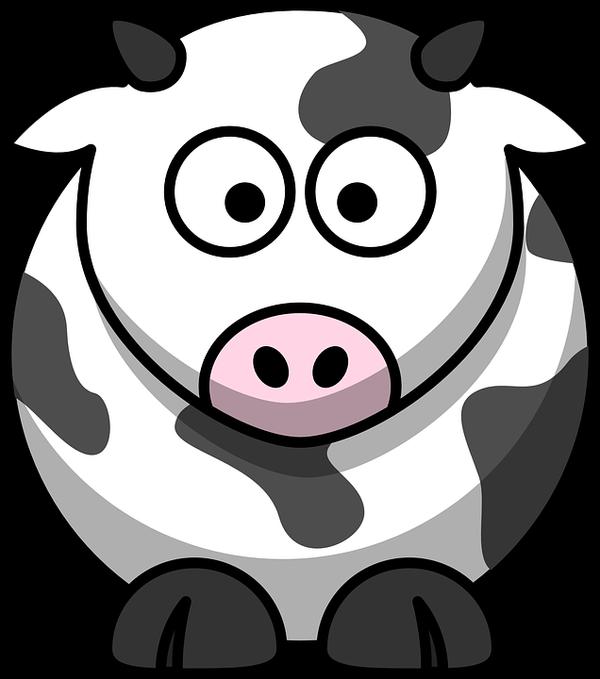 skuteczna inseminacja bydła